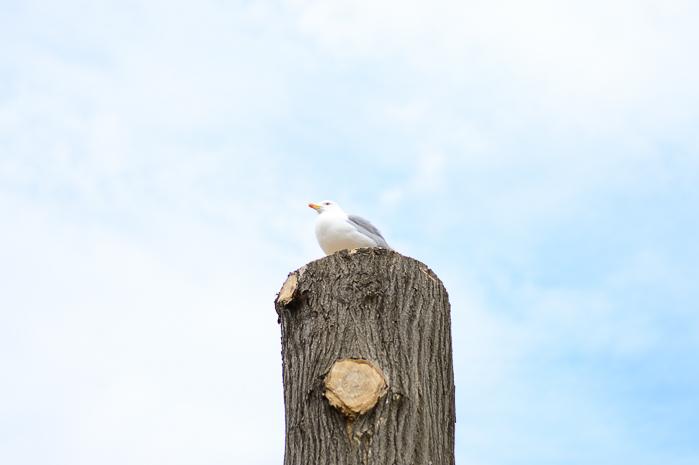 Nessebar Bird
