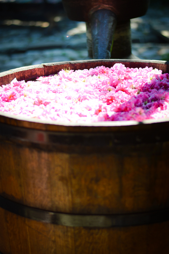 How Rose Oil is Prepared in Kazanlak