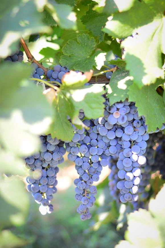Chateau-Copsa-Travel-Vineyard-Wine-Denina-Martin-1