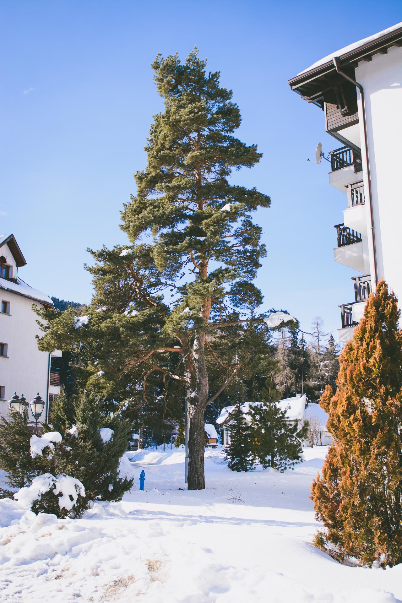 Borovets hills spa resort tree