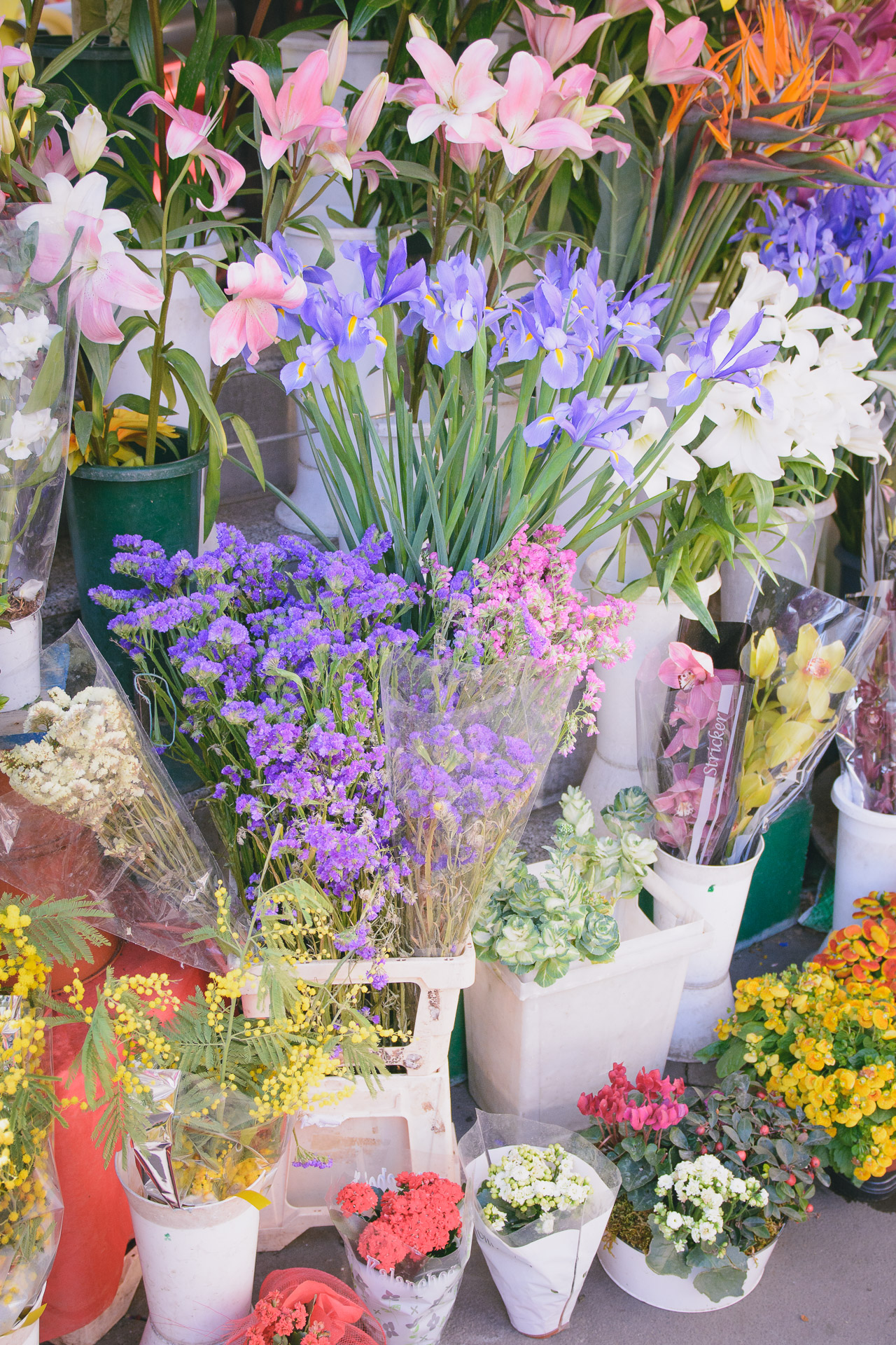 Flowers of Rome
