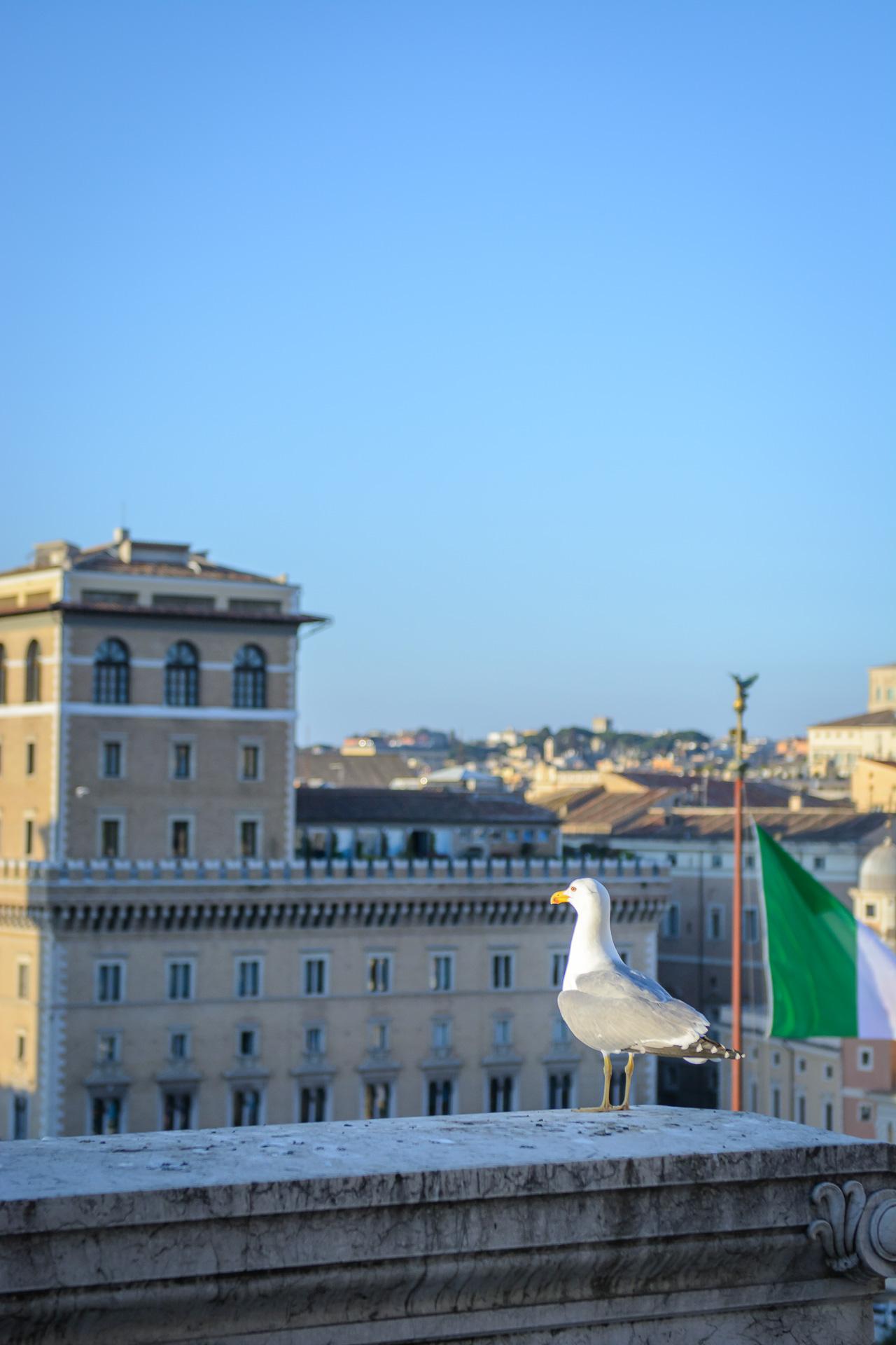 monument vittorio emanuele II Rome Piazza Venezia