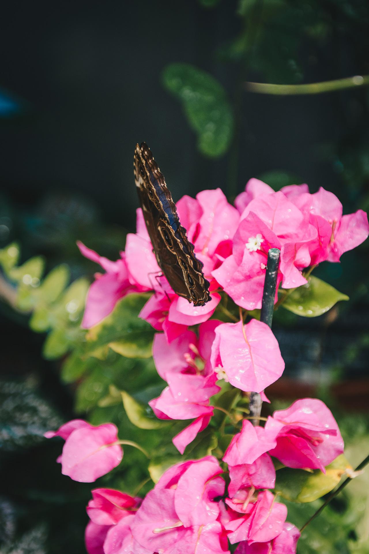 Botanic butterfly 06072017