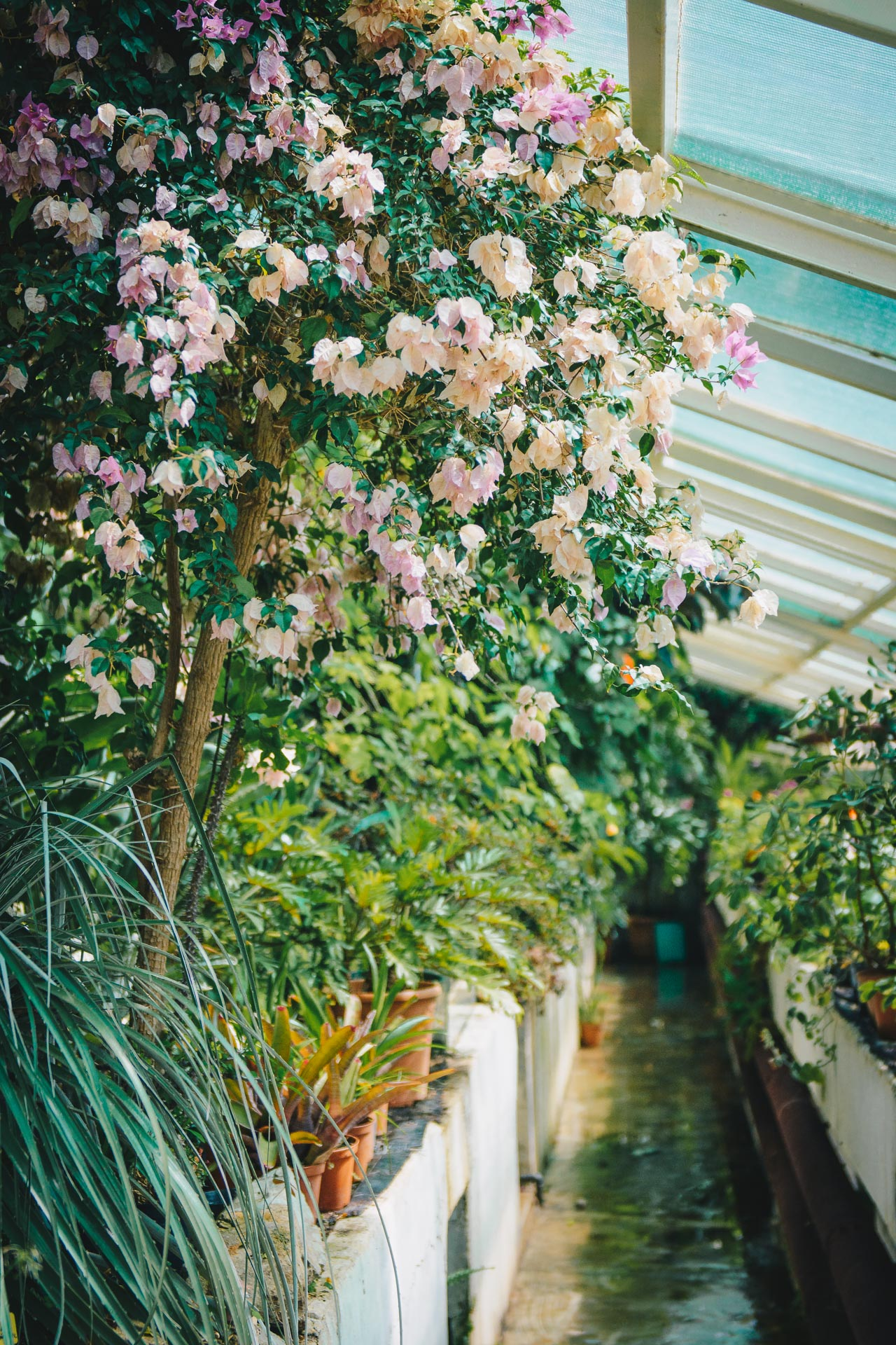 Orangerie flowers