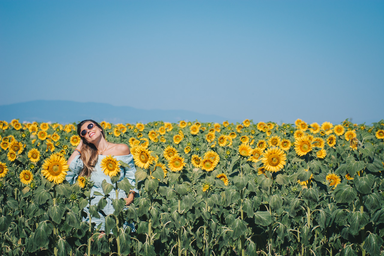 Sunflower fields bloom blogger