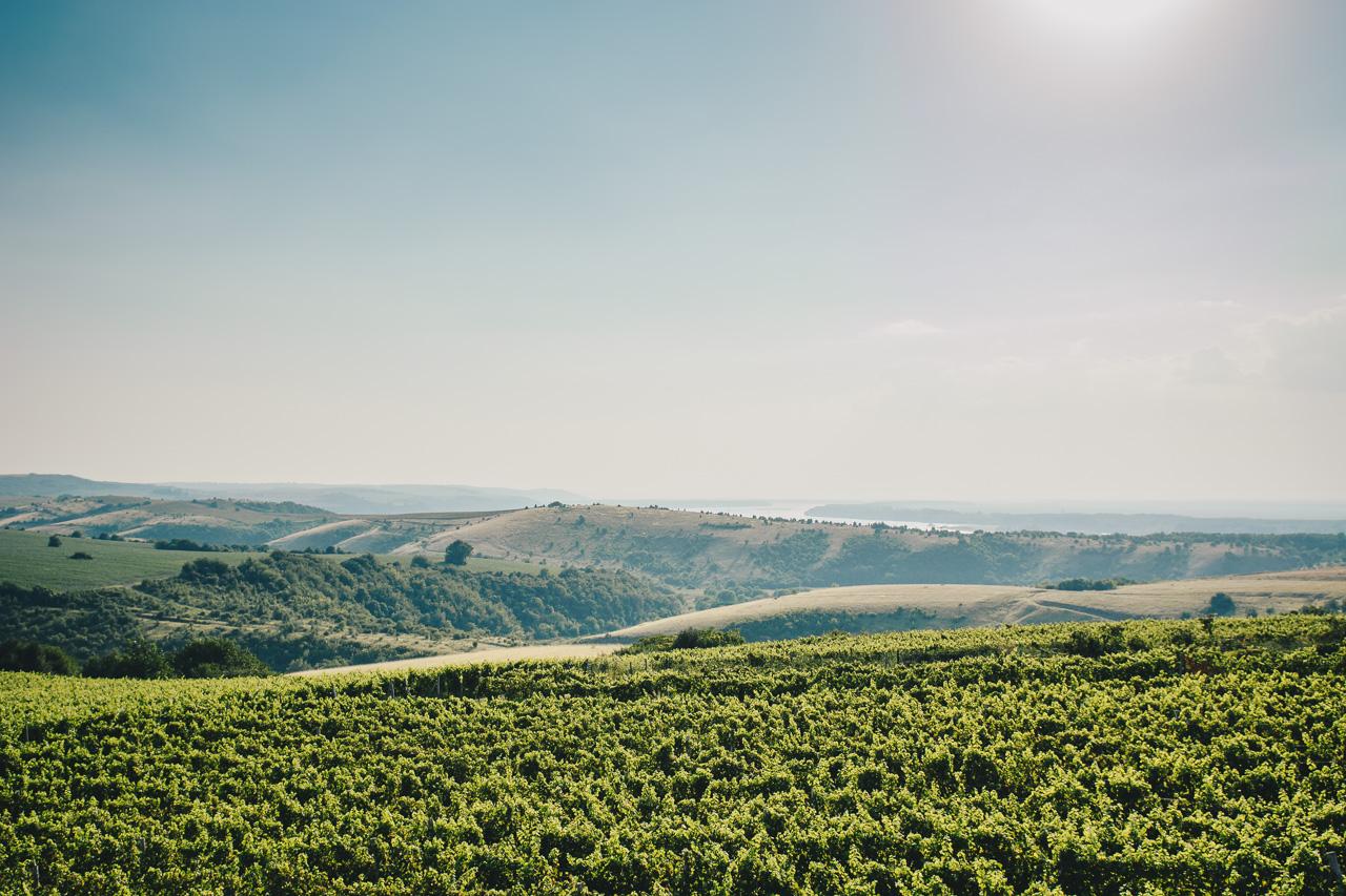 Панорама винарна седем поколения
