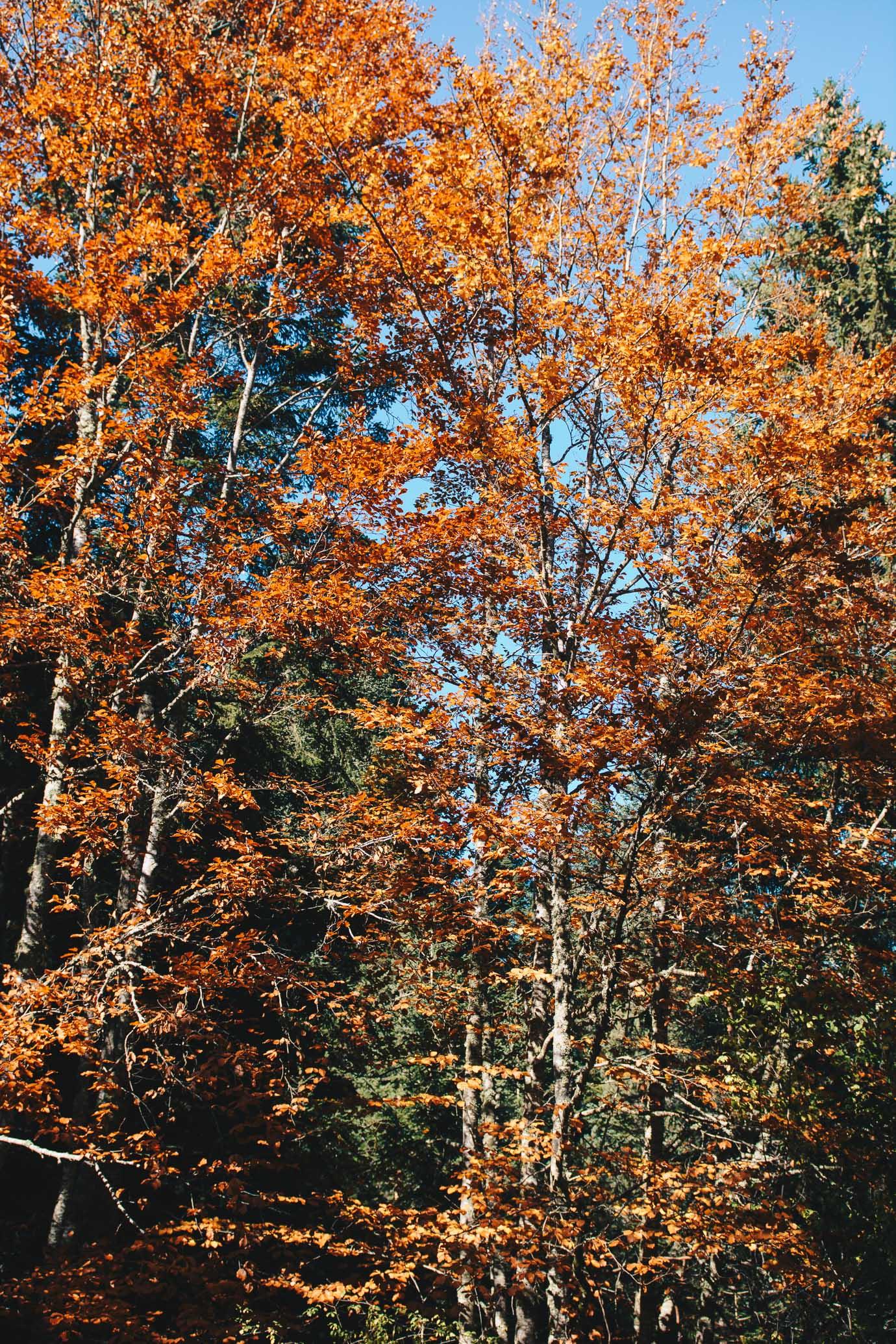 Есен в Пирин