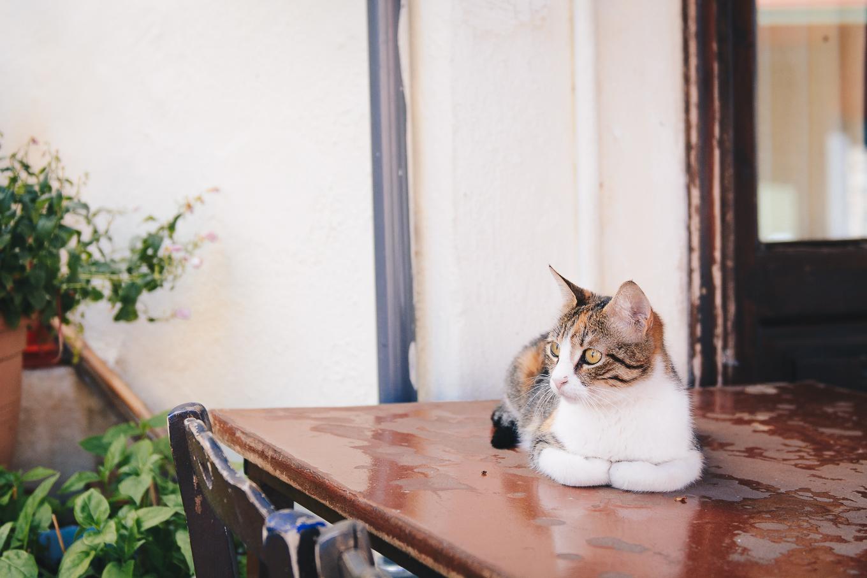 Kavala cat