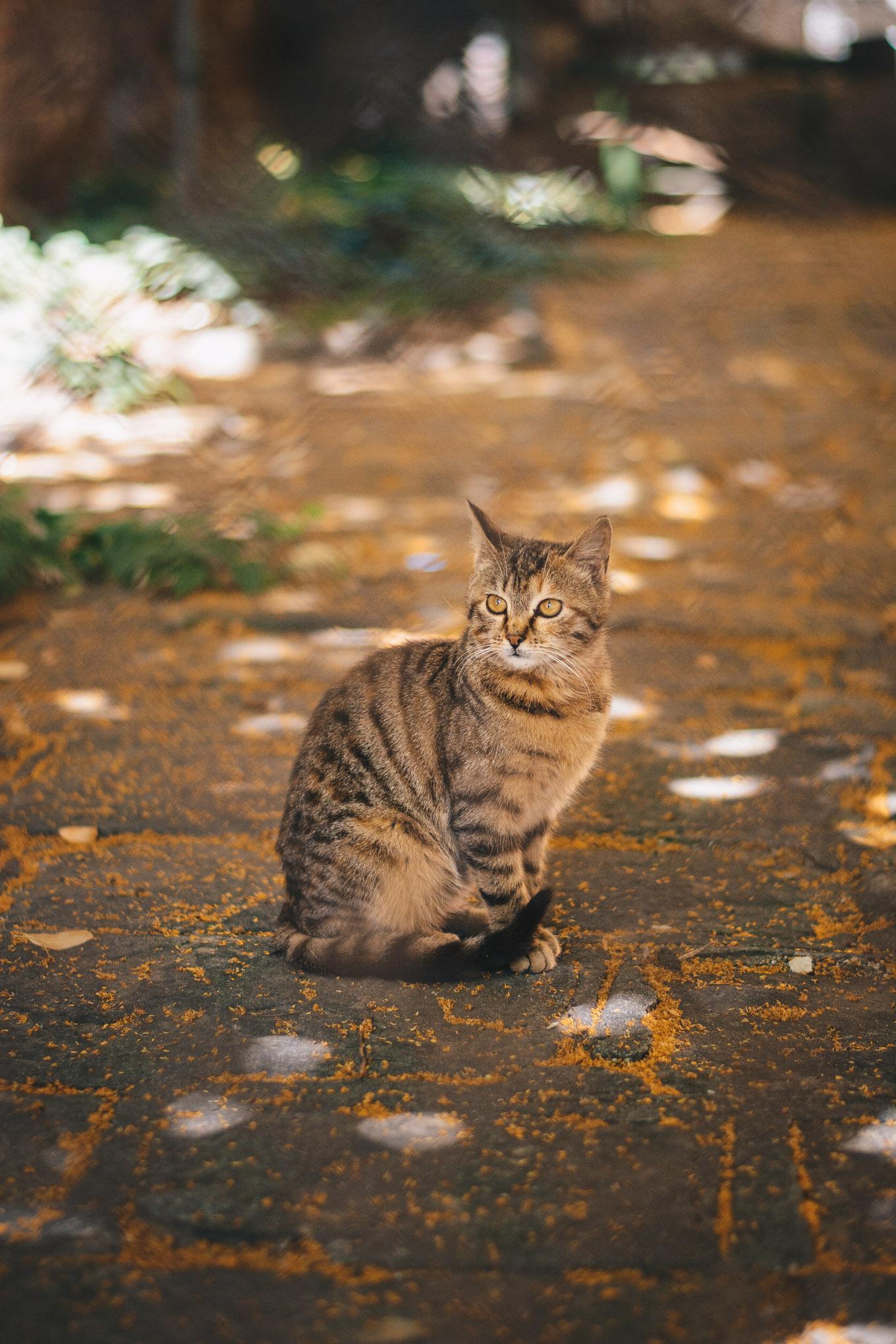 Cat in sofia